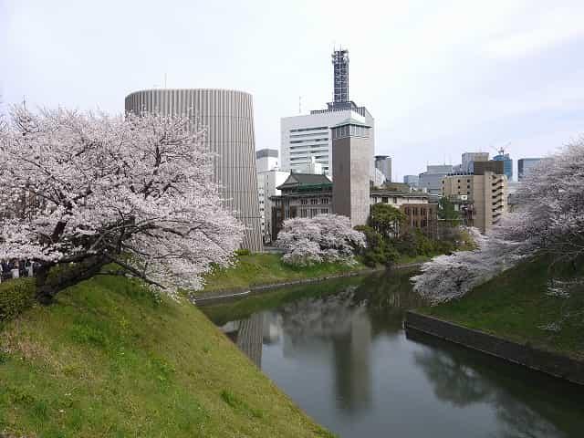 北の丸公園 桜