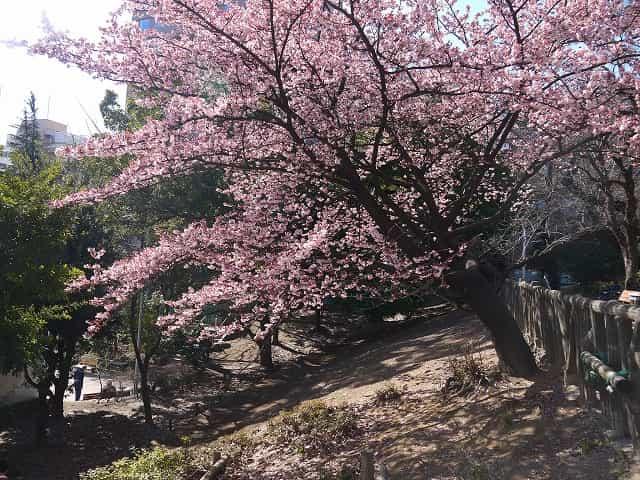 東郷元帥記念公園 三番町町会創立五十五周年記念樹