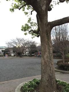 東林みなみ公園 公園入り口には大きな木が植えてあります。朝は、集団登校の集合場所でもあります。