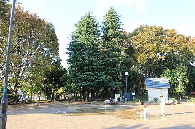 駒沢緑泉公園