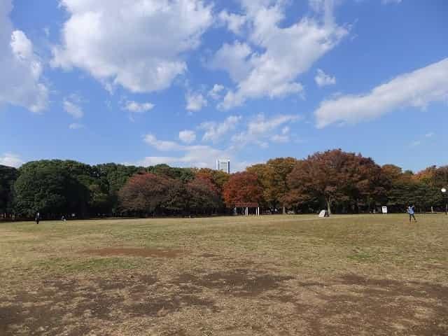 代々木公園 公園の中心にある中央広場。とても広いのでスポーツをして遊んでいる人もいます。