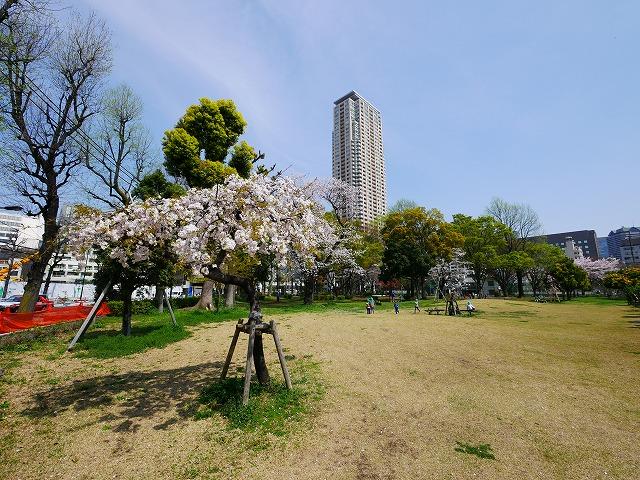 青山公園(北地区)